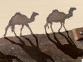 Small-saw-3-camels-A-1600-sig