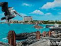 Mullet Bay Painting by Cindy Chinn