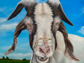 old goat painting by Cindy Chinn
