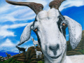 Goats Of St Martin Andre painting by Cindy Chinn