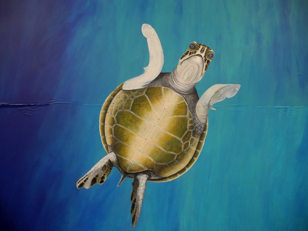 Turtle-01-01