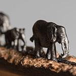 Elephant-tn-150